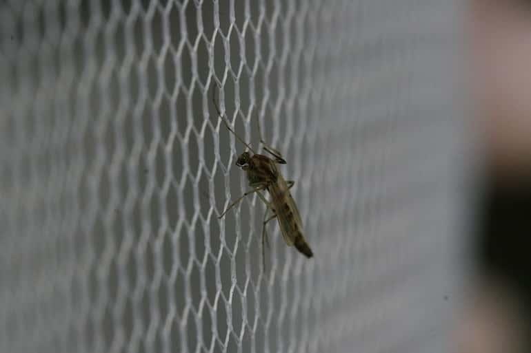 Szúnyogháló