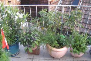 Az erkélyen fűszernövényeket is nevelhetünk.