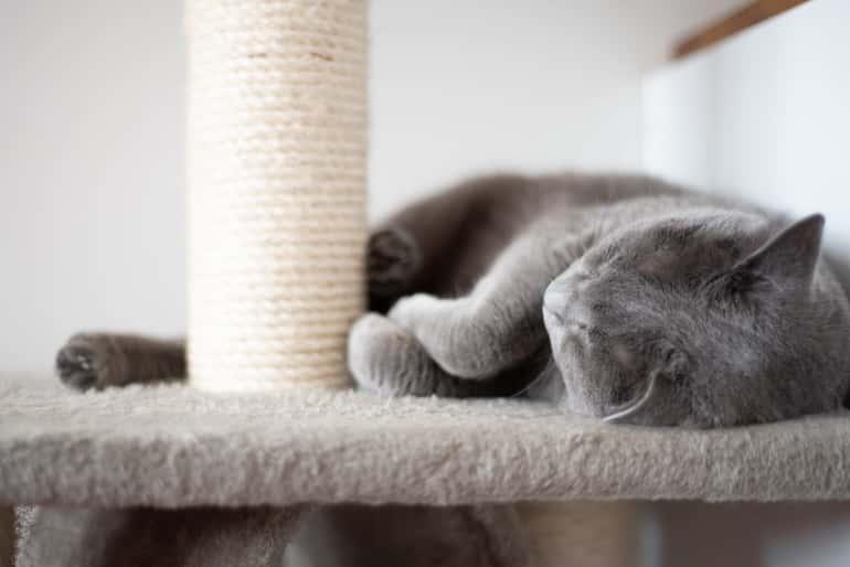 Még a cica érkezésekor be kell szereznünk ezt a macskabútort.