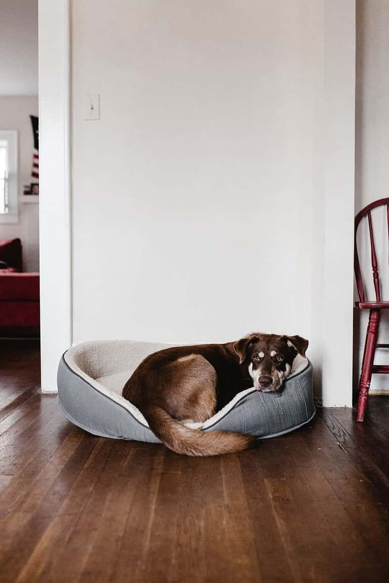 Kutyák esetében a szoktatás még egyszerűbb lesz, csak a megfelelő, védett környezetet kell megtalálnunk hozzá.
