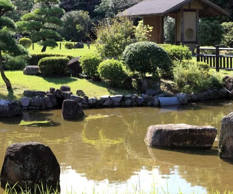 A természet lágy ölében – építsünk kerti tavat!