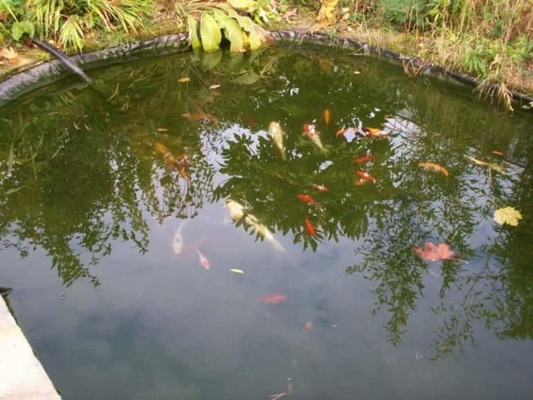 Kerti tó halakkal