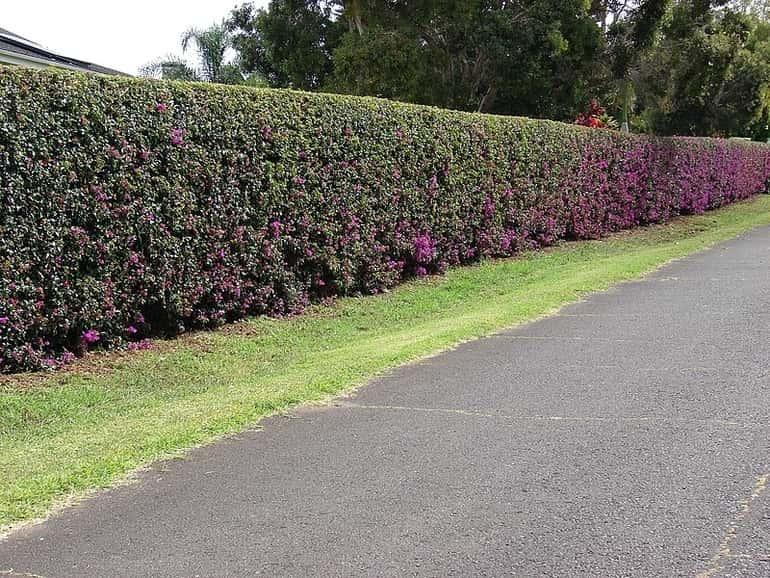 Sövénykerítés, a természetből emelt élő fal