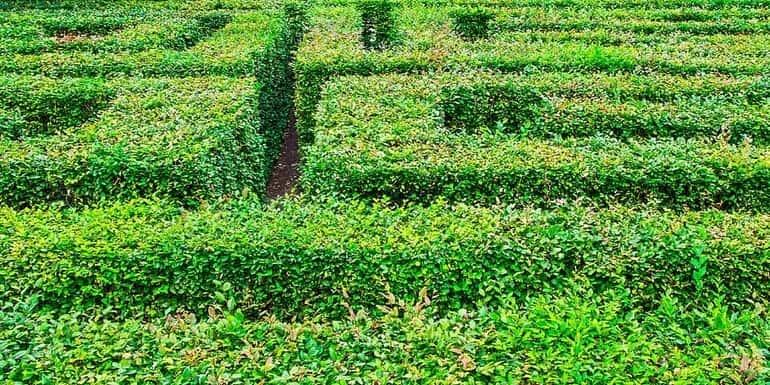 Sövénylabirintus