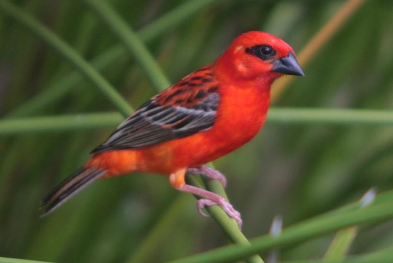 A vörösnek figyelmeztető, figyelemfelhívó szerepe van a természetben.