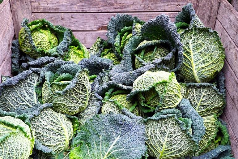 Gyökeres zöldségek, káposzta tárolására alkalmas lehet a kertben kialakított verem.