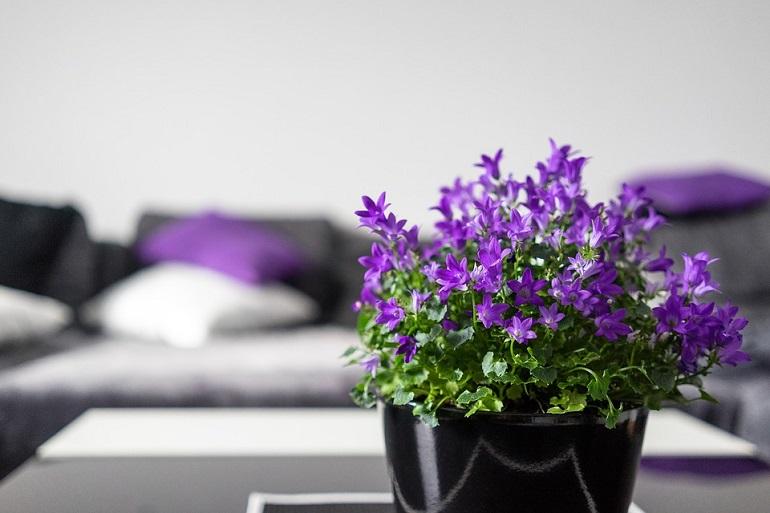 A lila bizonyos stílusokban erősebb jelenléttel bír.