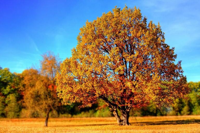 Nagyon sokak kedvence a pirosló levelek évada, és hogy teljes legyen az őszi életérzés, a lakóterüket is ehhez igazítják.